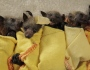 These Baby Bats Swaddled Like Burritos Are the Only Thing You Need Today