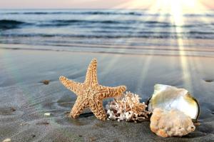 beach sand sunlight starfish seashells depth of field sea 5753x3809 wallpaper_wallpapermi.com_59