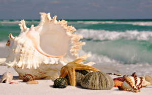 Seashells-at-the-sandy-beach-wallpaper_97