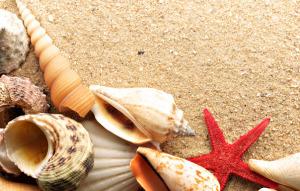 star-seashells-sand-sea-Favim.com-481609
