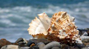 stock-footage-seashell-on-pebble-beach-sea-surf-in-background